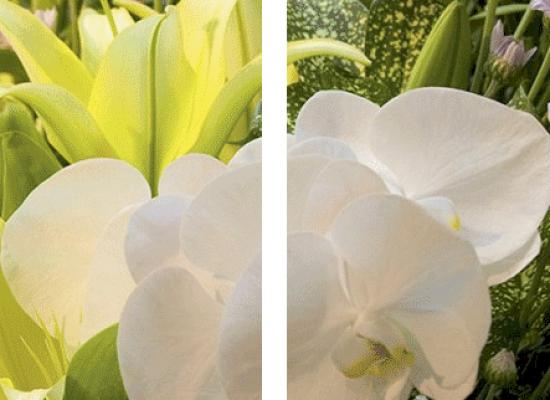 coronas-flores-blancas